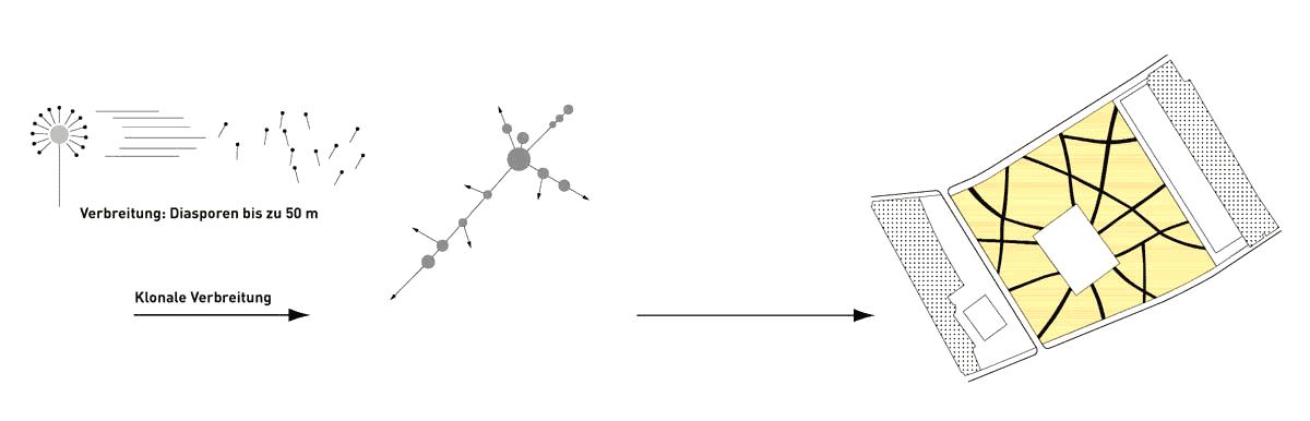 SSG Schlossareal Berlin Diagramm01